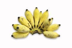 Kultiverad banan Royaltyfri Foto