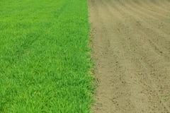 Kultiverad grön äng Arkivfoton