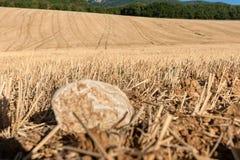 Kultiverade cornfields mot kullarna av bergen i Fran Royaltyfri Fotografi