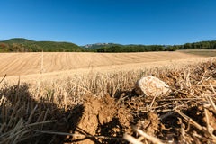Kultiverade cornfields mot kullarna av bergen i Fran Royaltyfri Foto