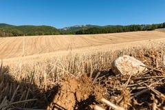Kultiverade cornfields mot kullarna av bergen i Fran Arkivbilder