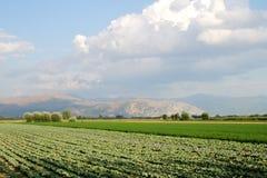 kultiverade fält Arkivfoto