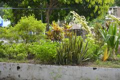 Kultiverade växter i lokalen av den kommunala Hallen av Matanao, Davao del Sur, Filippinerna royaltyfria bilder