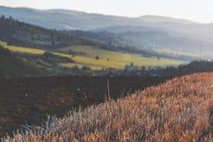 Kultiverat fält på solnedgången arkivbilder