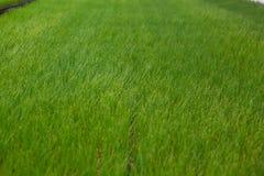 Kultywacja sadzonkowa ekologii Światowego środowiska dnia CSR rozsada Iść Zielony Eco Życzliwy Ziemski opieki zdrowotnej jedzenia Fotografia Stock