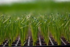 Kultywacja sadzonkowa ekologii Światowego środowiska dnia CSR rozsada Iść Zielony Eco Życzliwy Ziemski opieki zdrowotnej jedzenia Obrazy Royalty Free