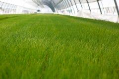 Kultywacja sadzonkowa ekologii Światowego środowiska dnia CSR rozsada Iść Zielony Eco Życzliwy Ziemski opieki zdrowotnej jedzenia Zdjęcie Royalty Free