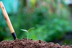 Kultywacja zieleni drzewa obraz stock