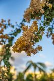Kultywująca roślina w Oman Salalah fotografia royalty free