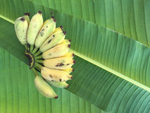 Kultywujący banan, Tajlandzki banan i zieleń banan, leaf Obrazy Royalty Free