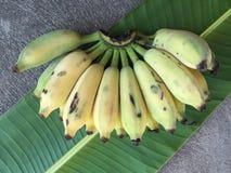 Kultywujący banan, Tajlandzki banan i zieleń banan, leaf Zdjęcie Royalty Free