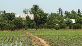 Kultywujący pole i wieśniaków domy zdjęcie wideo
