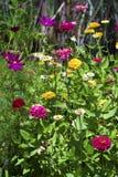 Kultywujących i dzikich kwiatów tło Zdjęcia Stock