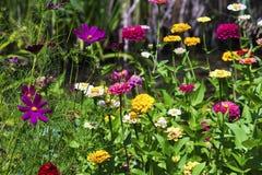 Kultywujących i dzikich kwiatów tło Zdjęcie Stock