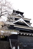 Kumamoto Castle and Cherry blossom Royalty Free Stock Photography