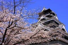 Kumamoto-Schloss mit Kirschblüte-Vordergrund Lizenzfreie Stockfotografie
