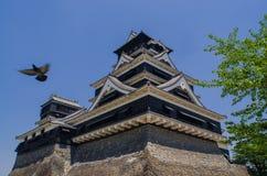 Kumamoto-Schloss und die Taube Lizenzfreie Stockfotografie