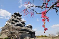 Kumamoto-Schloss und japanische Aprikose Stockfotografie