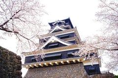 Kumamoto slott Kumamoto-jo med Cherry Blossom från Kumamoto, Japan fotografering för bildbyråer