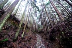 Kumano forntida Kodo vallfärdar slingan Arkivfoton