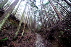 Kumano Kodo ancient pilgrim trail Stock Photos