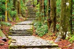 Kumano Kodo Trail. Kumano Kodo at Daimon-zaka, a sacred trail designated as a UNESCO World Heritage site in Nachi, Wakayama, Japan Royalty Free Stock Photography