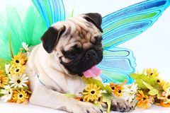 Kumar. A dog with flowers as props stock photos