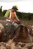 Chainsaw at work Royalty Free Stock Images