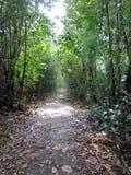 Kumarakom-Vogelschutzgebiet in Kerala, Indien stockfoto