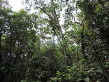 Kumarakom-Vogelschutzgebiet in Kerala, Indien lizenzfreies stockfoto
