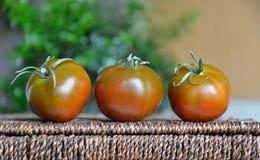 Kumato-Tomaten gelegt in eine Linie Stockbilder