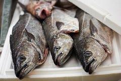 Kummel på fiskmarknaden Dublin Ireland royaltyfria foton