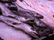 Kummelfisk på is på en fiskmarknad royaltyfri foto
