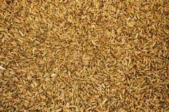 Kummin-/fänkålfrö som visas på matmarknad i Kyrenia, Nort royaltyfria bilder