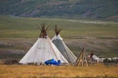 Kumpel zwei in der Tundra im Sommer stockfotografie