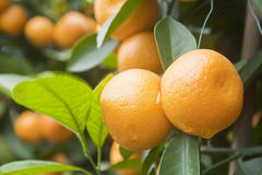Kumquat Images stock