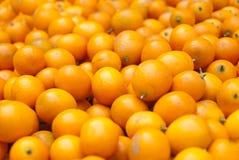 Kumquat Immagine Stock