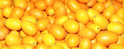 Kumquat Fotografia Stock Libera da Diritti