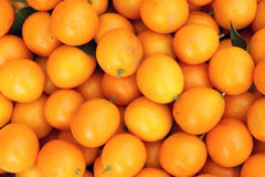 Kumquat Obraz Stock