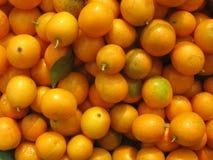 Kumquat Foto de archivo libre de regalías