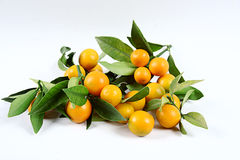 Kumquat. Is on a white background Royalty Free Stock Images