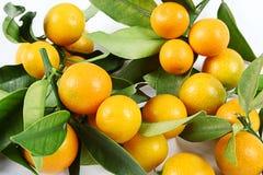 Kumquat. Is on a white background Royalty Free Stock Photo