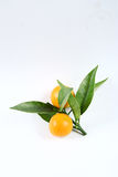 Kumquat. Is on a white background Royalty Free Stock Photography