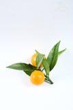 kumquat photographie stock libre de droits