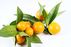 Kumquat Royalty Free Stock Photo