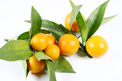 Kumquat Fotografie Stock