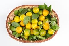 kumquat Royaltyfri Bild