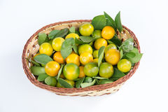 kumquat Stock Foto