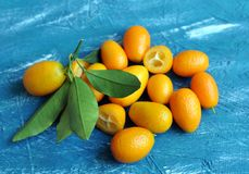 Kumquat on a blue background with green leaves stock images