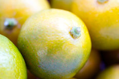 Kumquat Calamondin Fruit Macro Royalty Free Stock Image